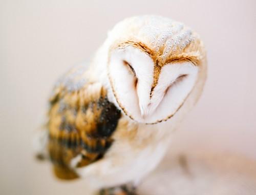 ashleigh-leech-someform-owl-cafe-village-tokyo-japan-01